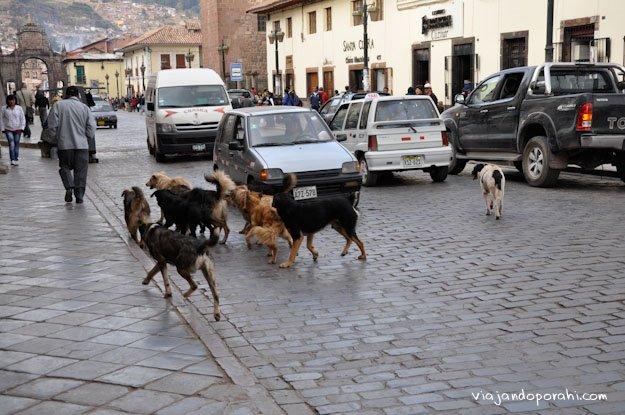 perros-cusco-peru-aniko-villalba-1-2