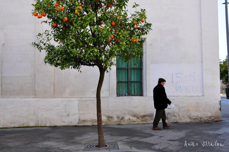 jerez-de-la-frontera-andalucia-aniko-villalba-4