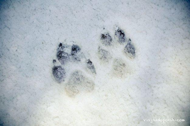 nieve-azrou-viajando-por-ahi-1