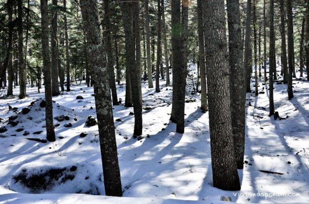 nieve-azrou-viajando-por-ahi-6