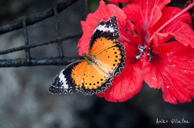 mariposa-naranja-1