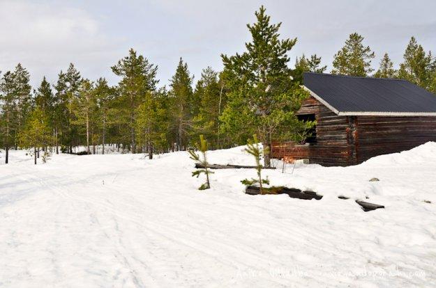 invierno-laponia-sueca