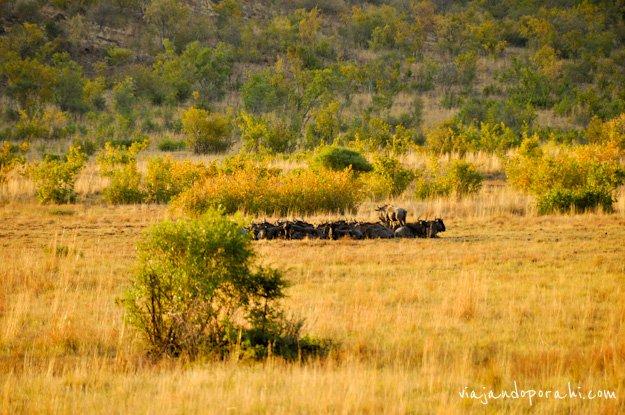 safari-sudafrica-10