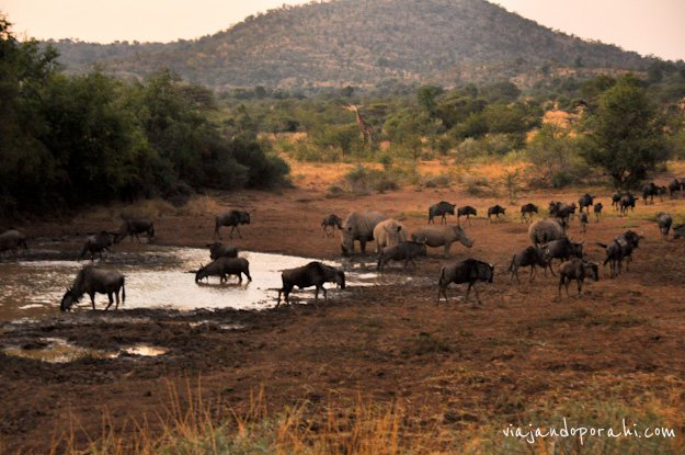 safari-sudafrica-24