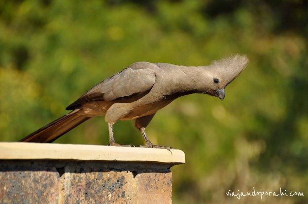 safari-sudafrica-26