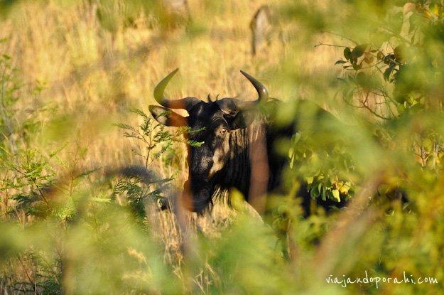 safari-sudafrica-4