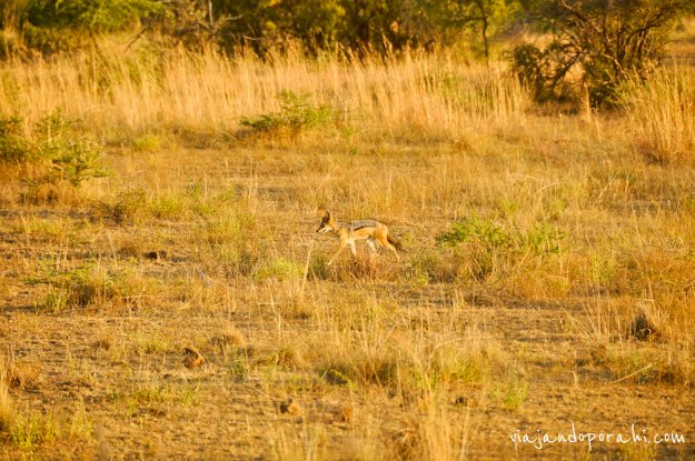 safari-sudafrica-9