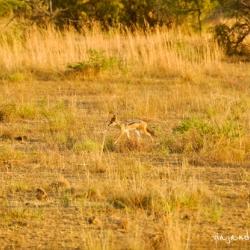 Reserva Pilanesberg