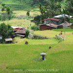 Historias cruzadas en Filipinas: crónica de una asunción presidencial<br>(o viaje a una terraza de arroz)