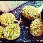 """Asia de la """"A"""" a la """"Z"""": D de Durian"""