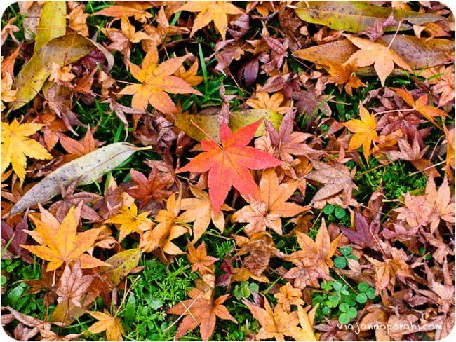 Soy una melancólica del otoño, es una de las cosas que más extraño cuando estoy de viaje