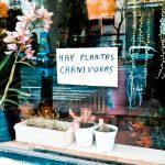 Arte, mate y plantas carnívoras