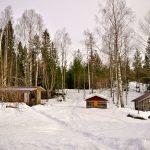 Querido Blog: Hoy estuve en un bosque encantado <br>(y conocí a una gallina de nieve)