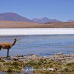 Recorrido fotográfico por el Altiplano boliviano <br>(Uyuni y alrededores)