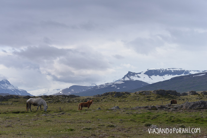 autostop-por-islandia-34