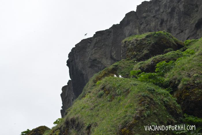 islandia-aniko-villalba-3