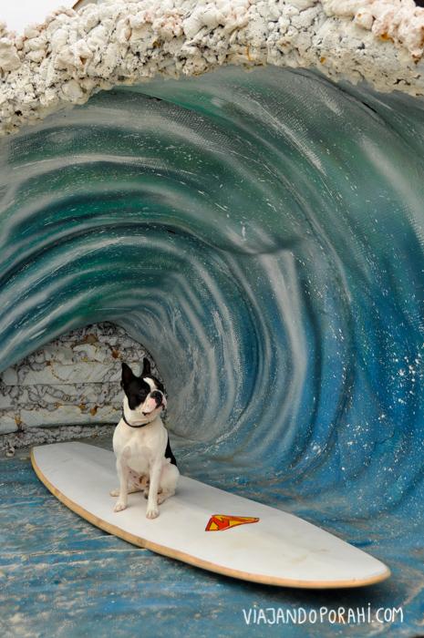 surf-viajandoporahi-8