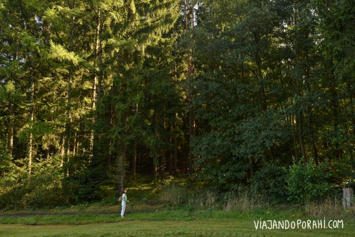Frente al bosque