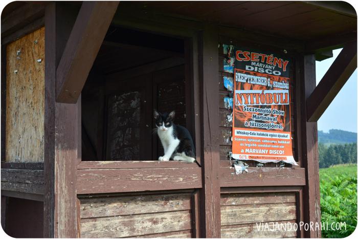 O este gato que me observaba.