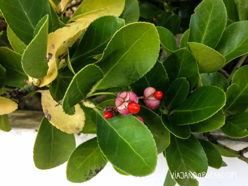 Esta planta