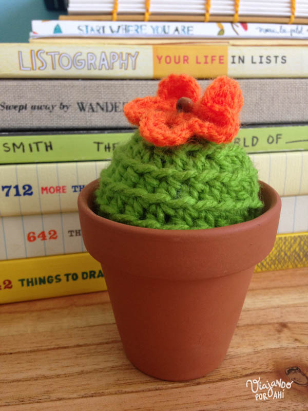 Mi cactus nuevo