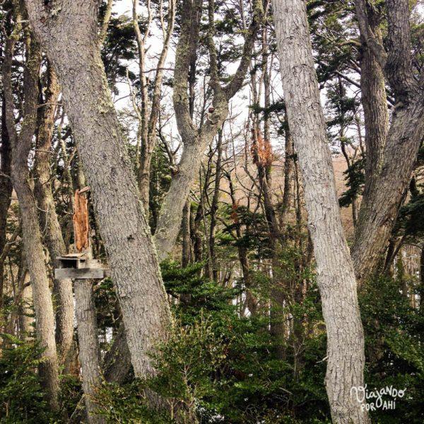 El bosque a pocos pasos