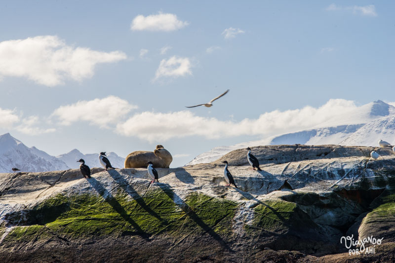 Lobos marinos, cormoranes y gaviotas