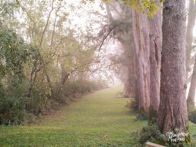 Estas fotos me las mandó mi mamá un día de mucha niebla en el Tigre.