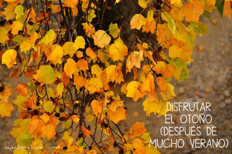 viajar-es-disfrutar-el-otoño