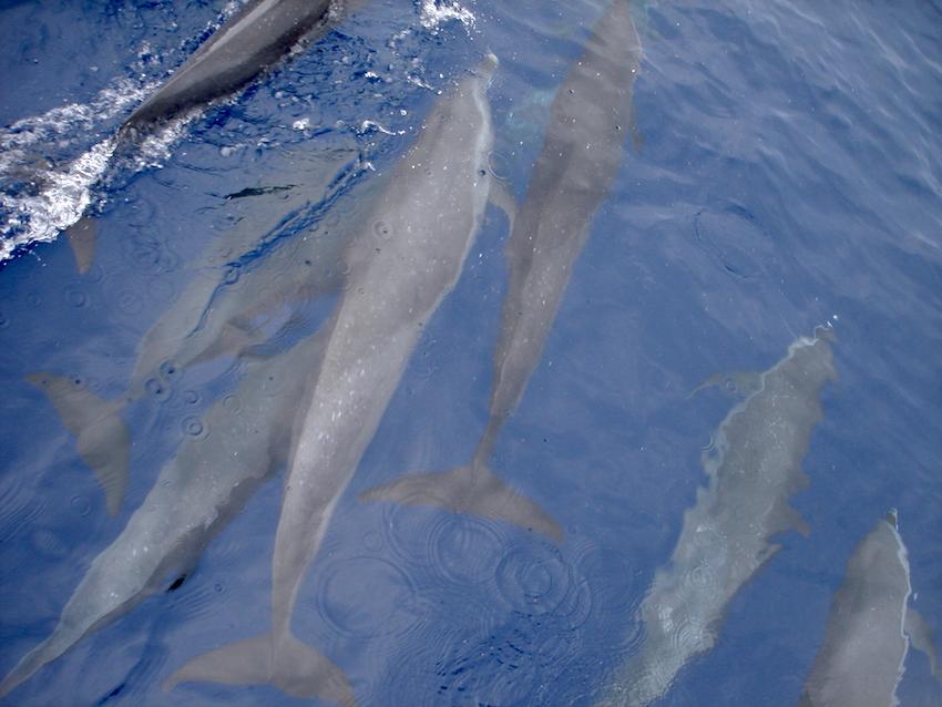 En el cruce en velero de Colombia a Panamá vimos delfines nadando al lado del barco