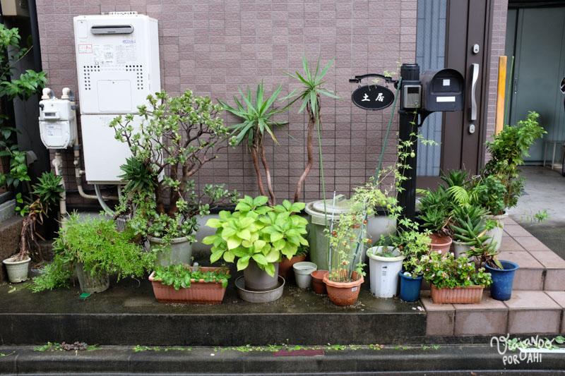 Plantas en los frentes
