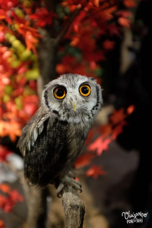 """El """"Owl cafe"""" no me gustó tanto porque los tienen atados a los búhos."""