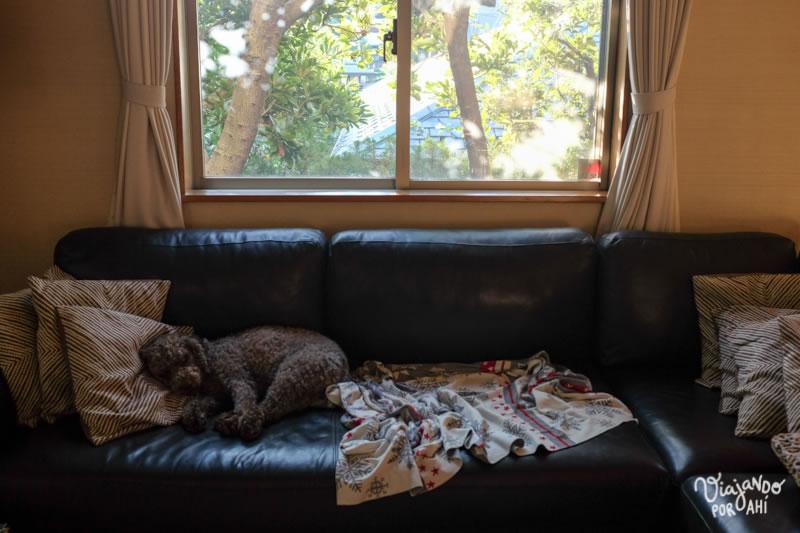Descansando en el sillón