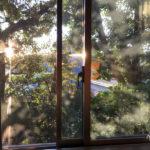 Nuestra primera experiencia de <i>housesitting</i> en Tokio