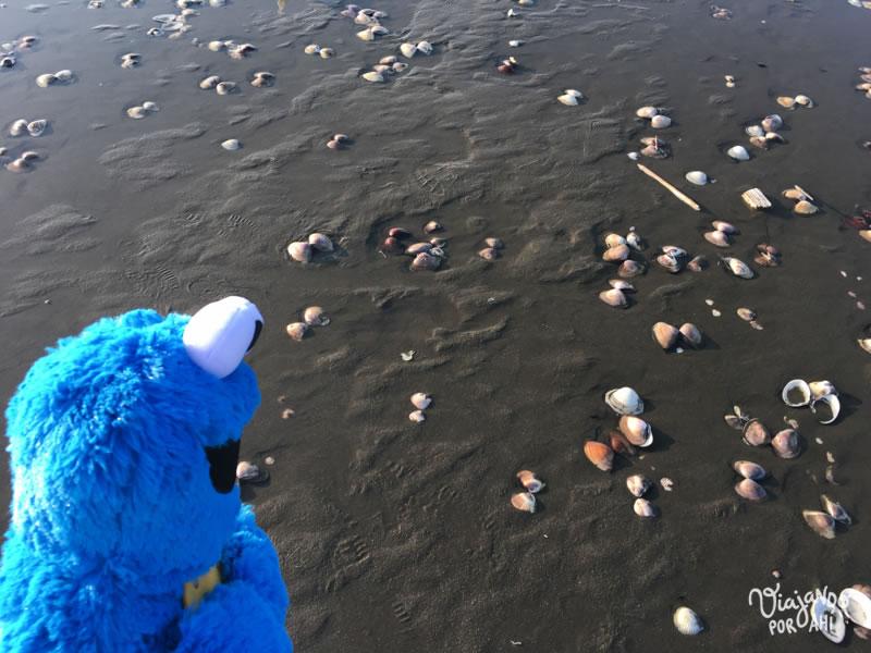Cookie buscando galletitas