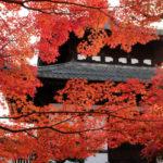 En busca de las hojas de otoño en Osaka, Nara y Kyoto