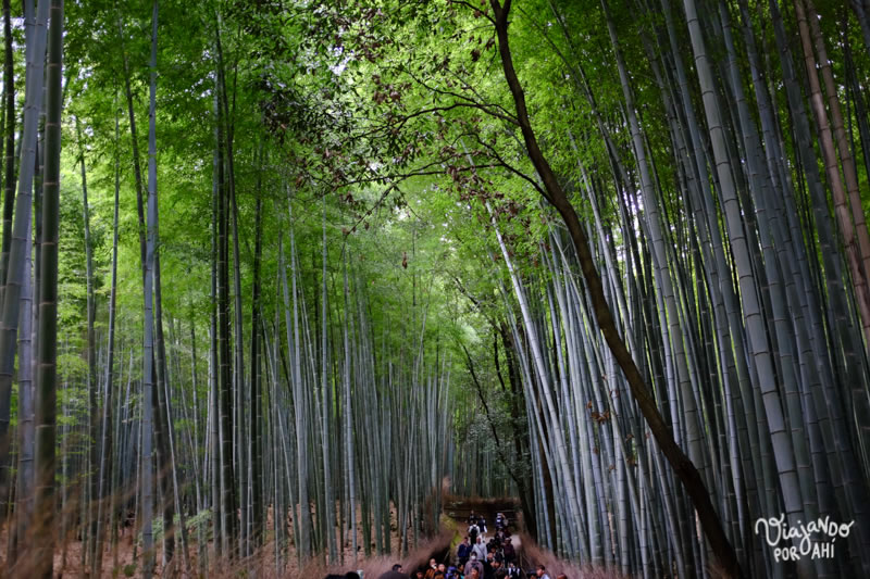kyoto-kansai-viaje-japon-20