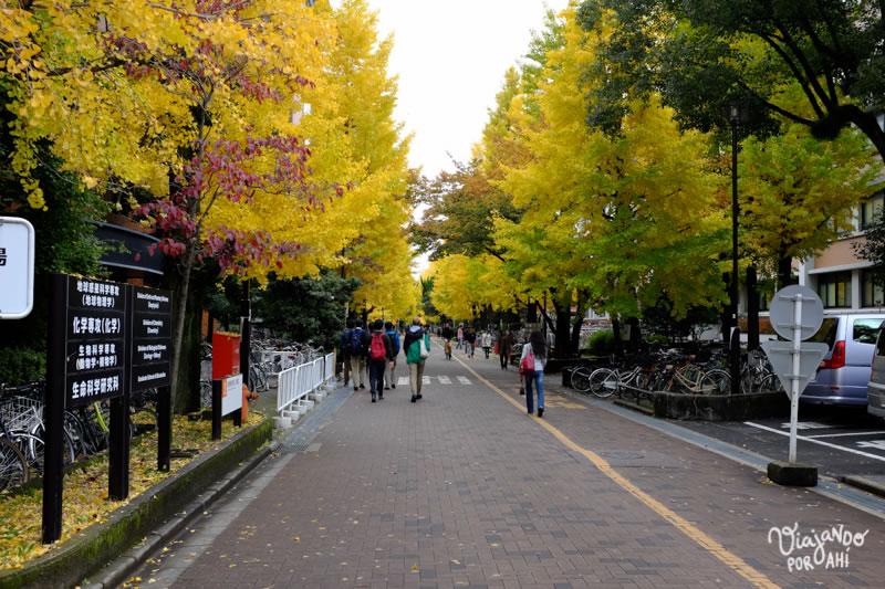 kyoto-kansai-viaje-japon-5