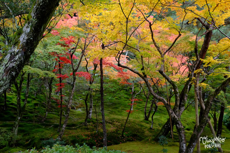kyoto-kansai-viaje-japon-7