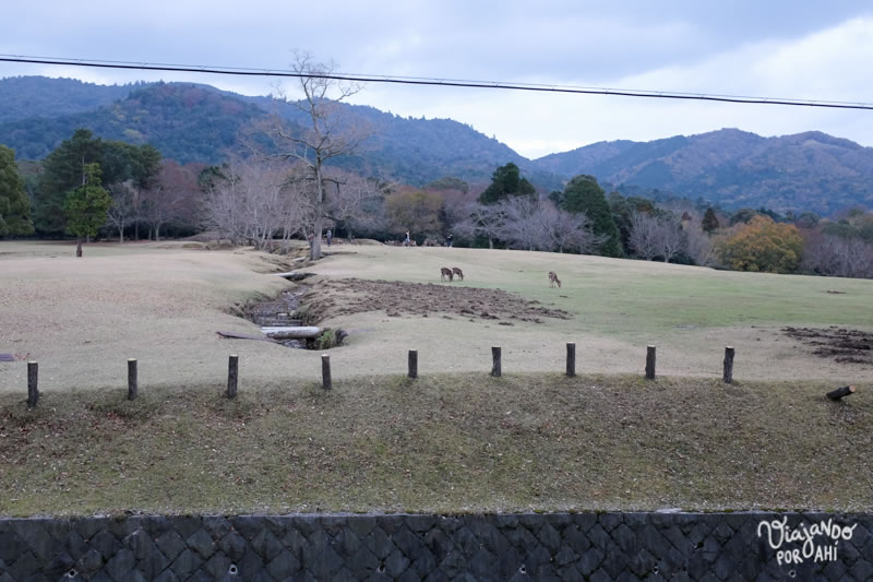 Volvimos a pasar por Nara a fines de noviembre y ya no había colores.
