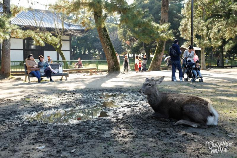 nara-kansai-viaje-japon-2
