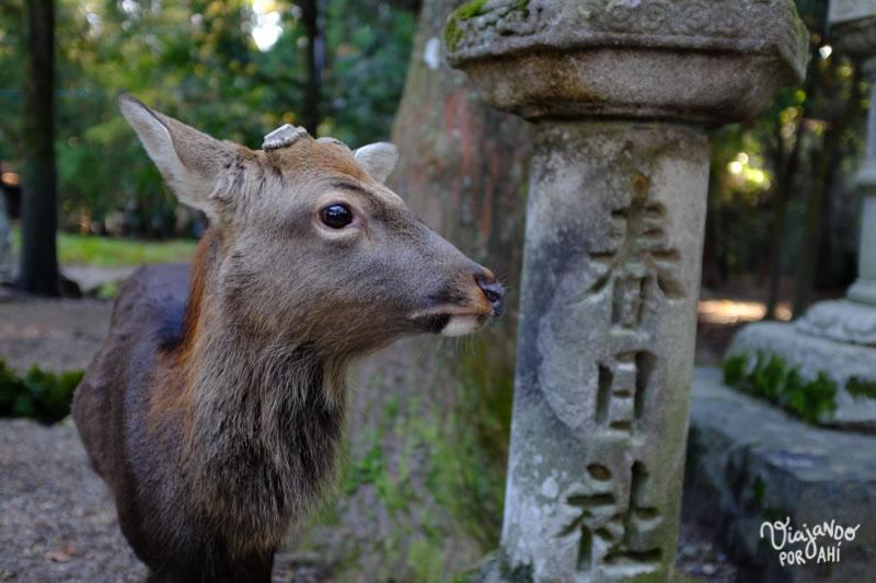 nara-kansai-viaje-japon-5