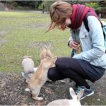 El día que fui a Okunoshima, la isla de los conejos en Japón