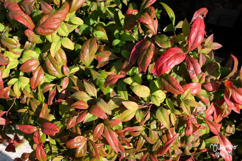 Las hojas de Osaka estaban queriendo cambiar de color.
